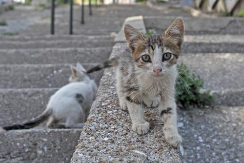 ¿Pueden multar por alimentar a gatos callejeros?
