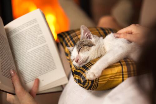 Gatos y grandes escritores