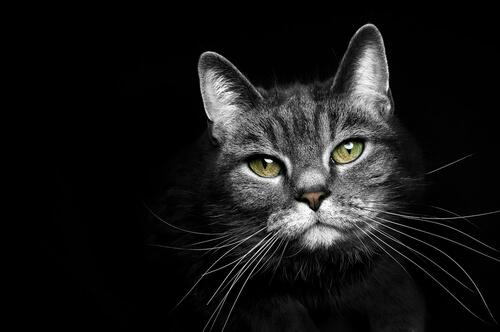 ¿Para qué sirven los bigotes del gato?