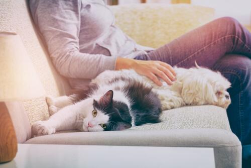 Obligaciones legales en torno a la tenencia de una mascota en el hogar