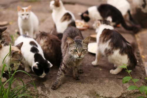 Grupo de gatos callejeros esperando comida.