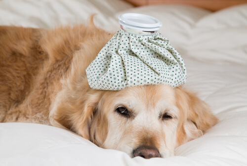 ¿La gripe también puede afectar a los animales?