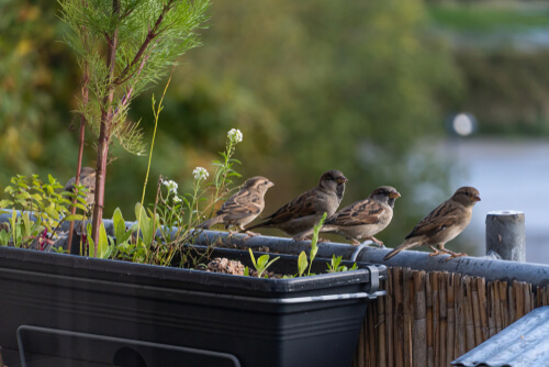 Cuidar las aves urbanas: pajareros en cuarentena