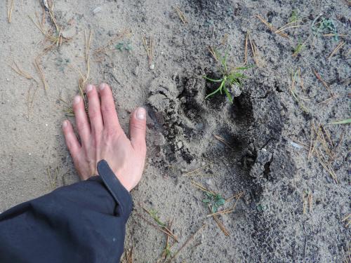 En tierra de todos: el documental de la WWF