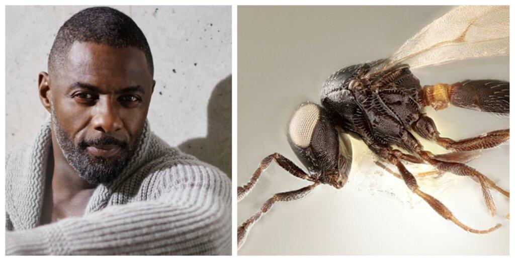 Idris elba: superheroína en la lucha contra las plagas