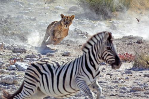 Selección natural y adaptación en el medio animal