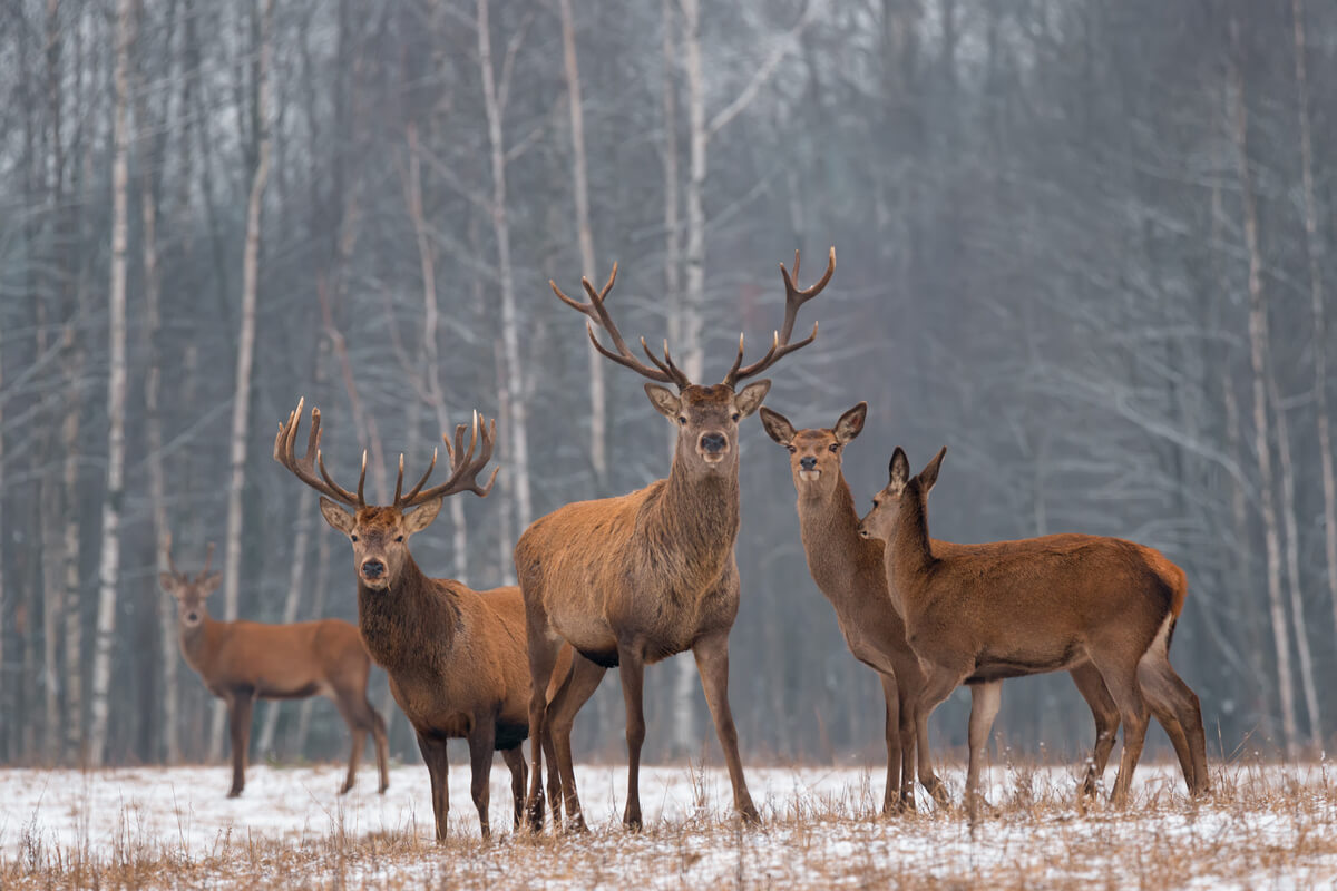 Existen animales con sentido del liderazgo.