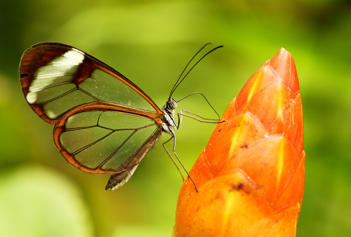 Una mariposa de cristal sobre una flor naranja.