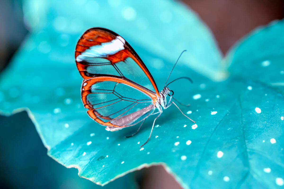 Una mariposa de cristal sobre una hoja azul.
