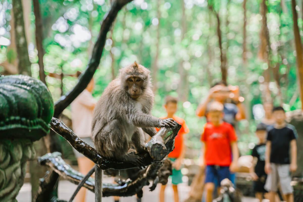 Un mono captivo en un zoo.