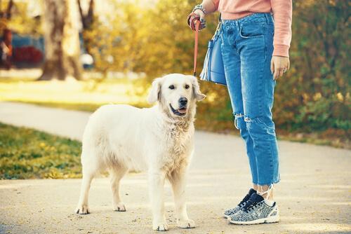 Mujer paseando a su perro con correa.