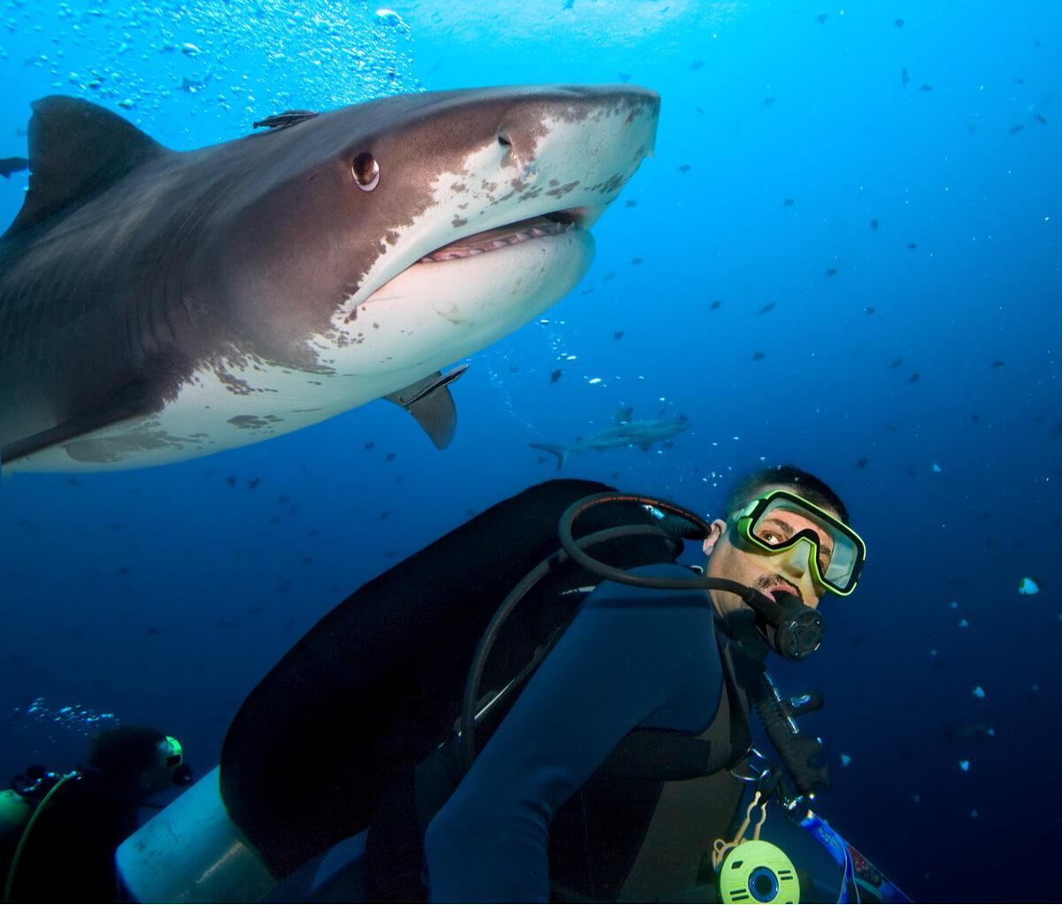 Documentos a firmar antes de nadar con tiburones.
