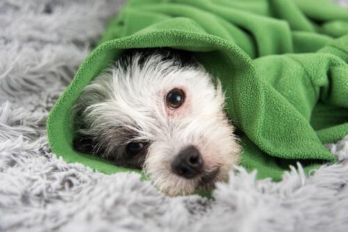 Consejos para prevenir el resfriado en perros