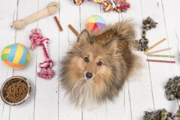 Consejos para entretener a las mascotas en casa