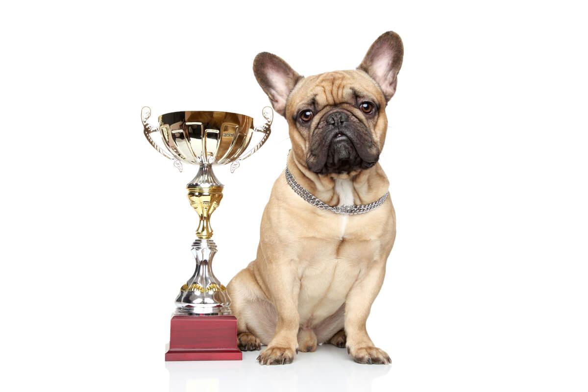 Un perro con un premio.