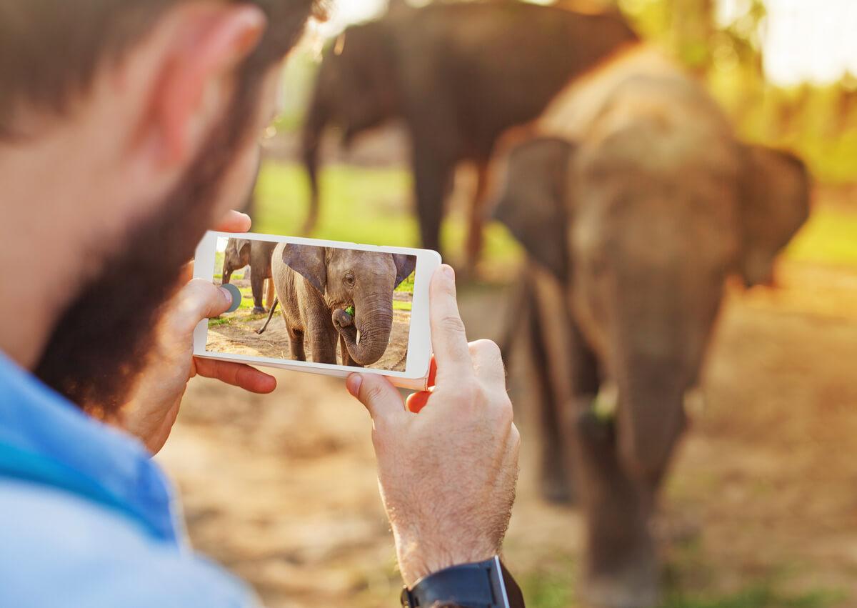 Fotos con animales salvajes: ¿qué es legal y qué no?