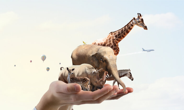5 acciones que contribuyen a la protección de los animales y el planeta