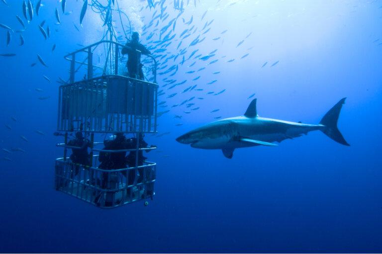 ¿Qué debes firmar antes de ir a nadar con tiburones?