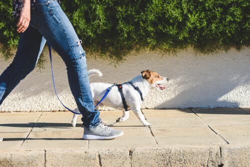Sacar a pasear a tu mascota en cuarentena