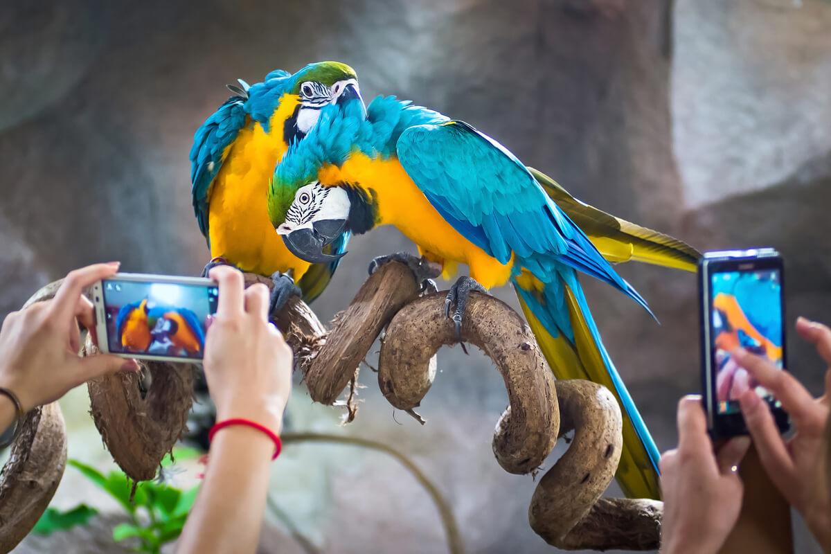 ¿Es legal hacerse fotos con animales salvajes?