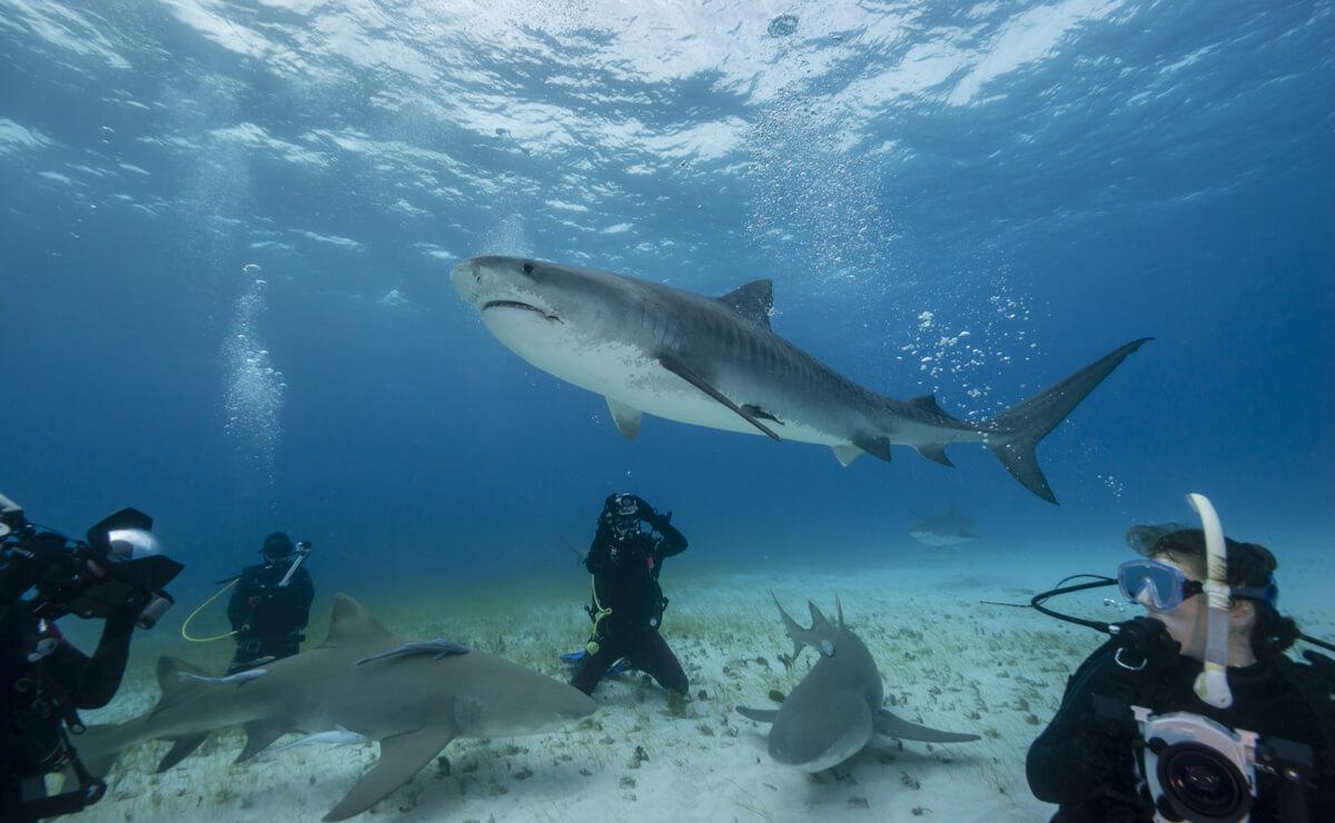 Grupo de personas nadando con tiburones.