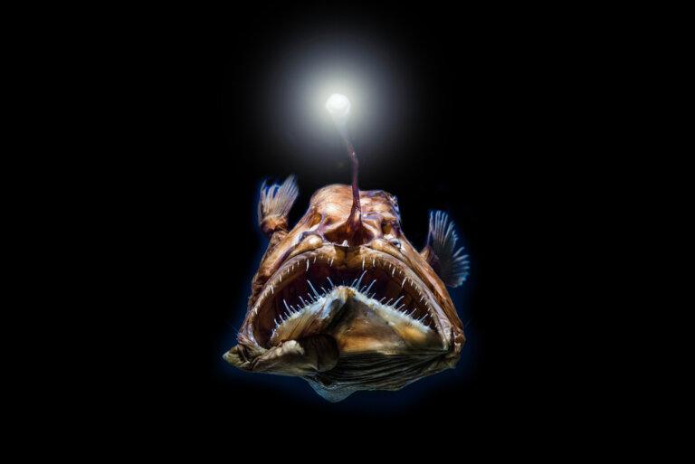 Los peces de aguas profundas tienen una visión excelente