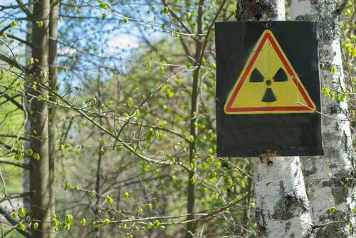Señal de radioactividad en el bosque de Fukushima.