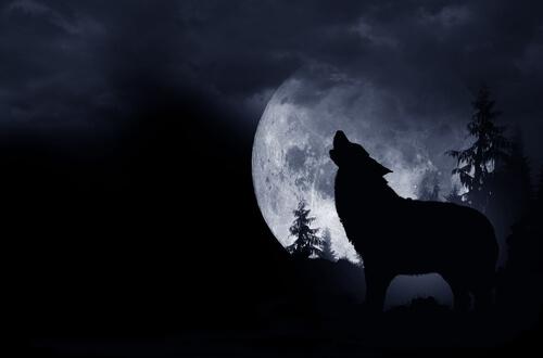 Los lobos no aúllan porque sea luna llena.