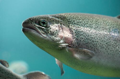 ¿Los peces sienten dolor? Lo que dice la ciencia