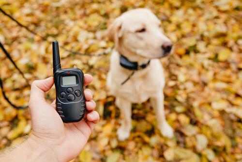 ¿Por qué no son recomendables los collares eléctricos para perros?