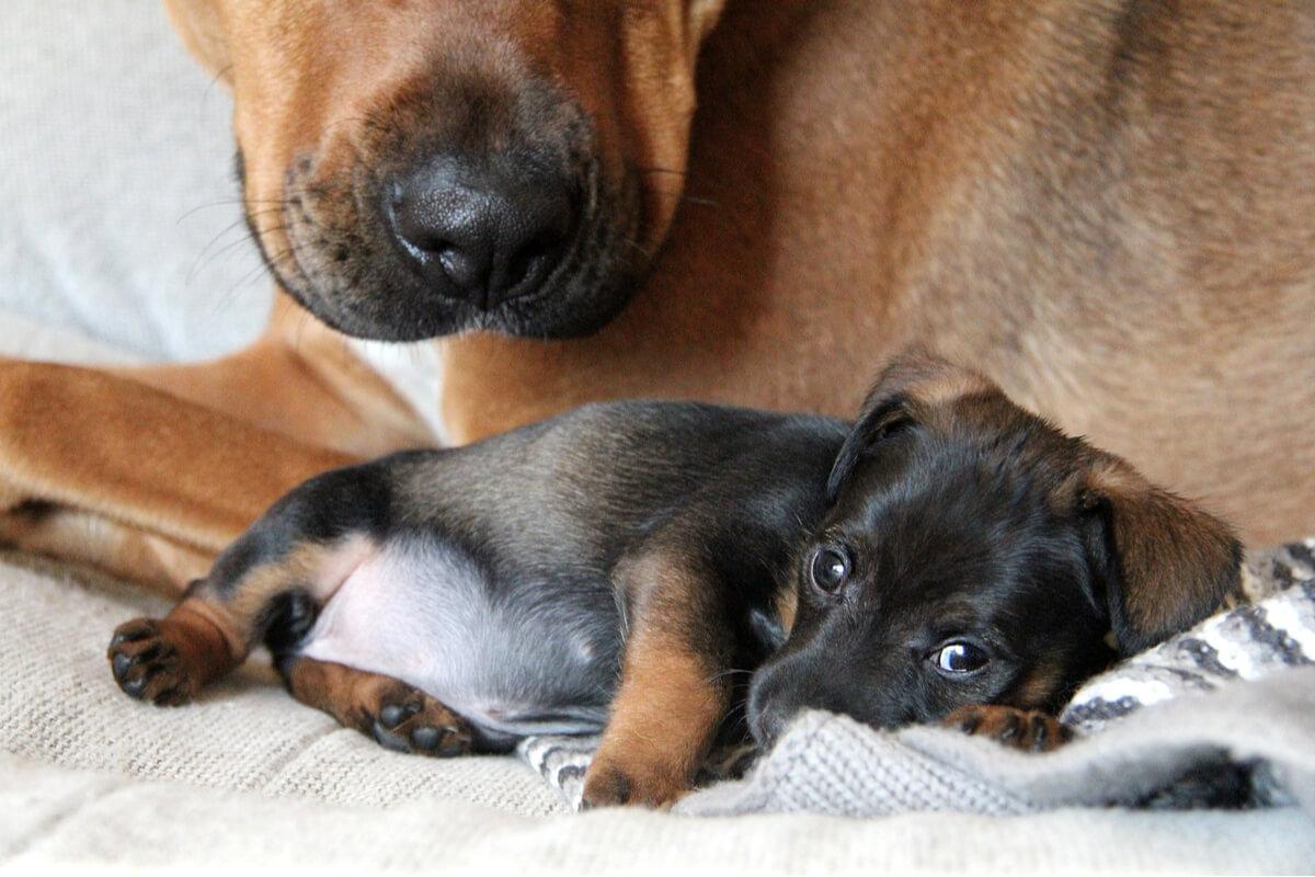 Agresividad en madres: comportamientos más comunes