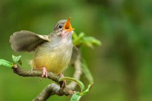 Los cantos de las aves pueden distinguirse si prestamos atención.