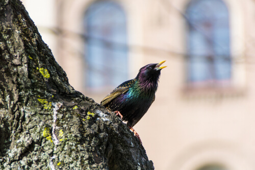 Los cantos de las aves pueden apreciarse desde casa.