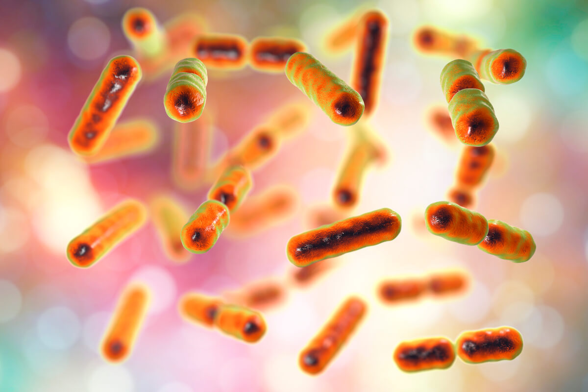 Las bacterias simbiontes se encuentran en el rumen.