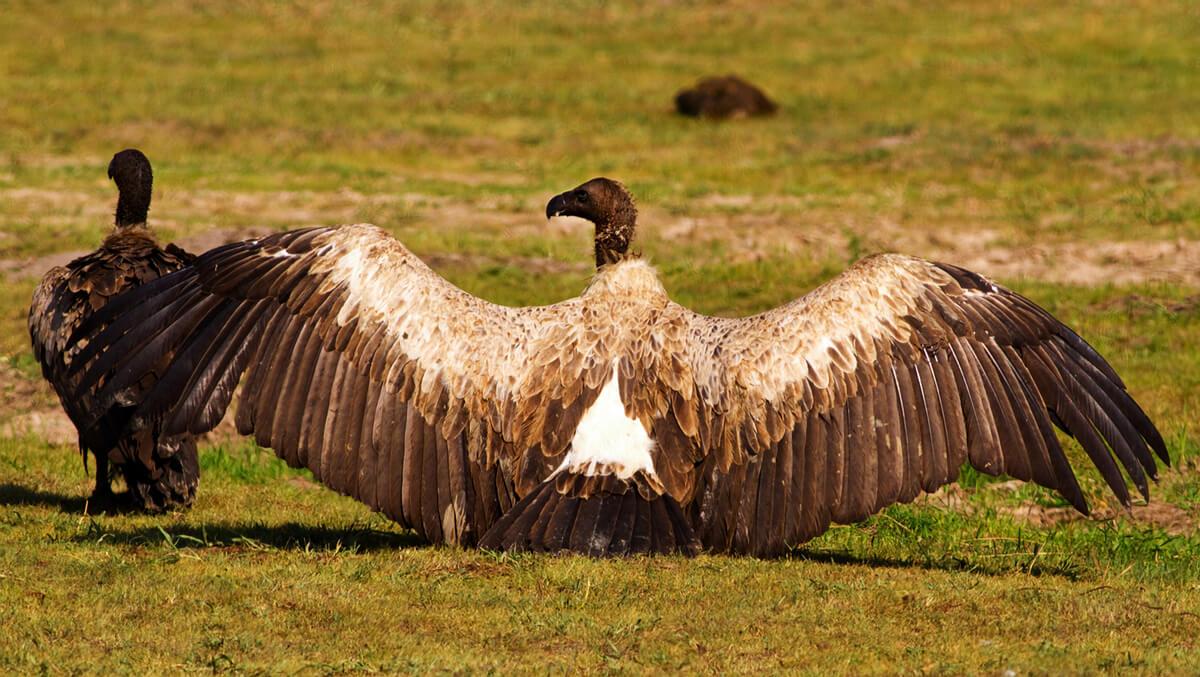 termorregulación en aves.