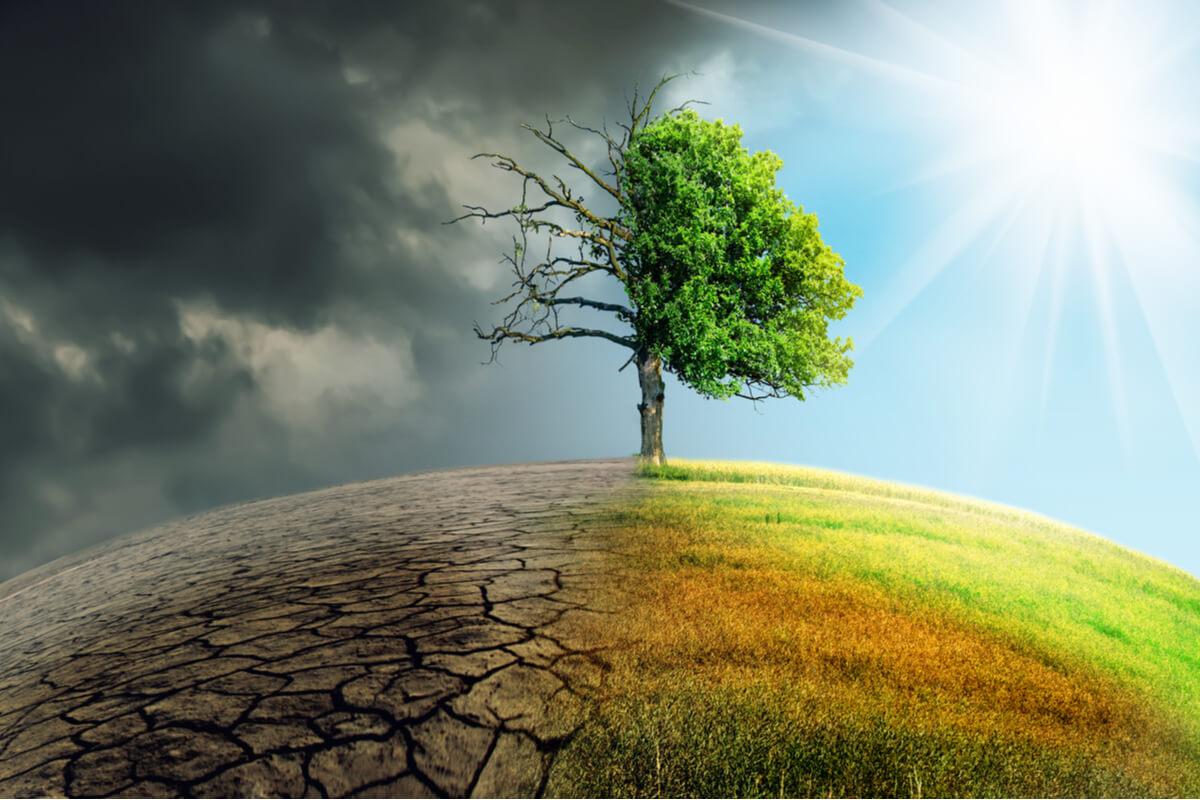 El cambio climático causa extinciones.