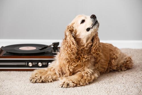 ¿Qué efectos tiene la música en los animales?