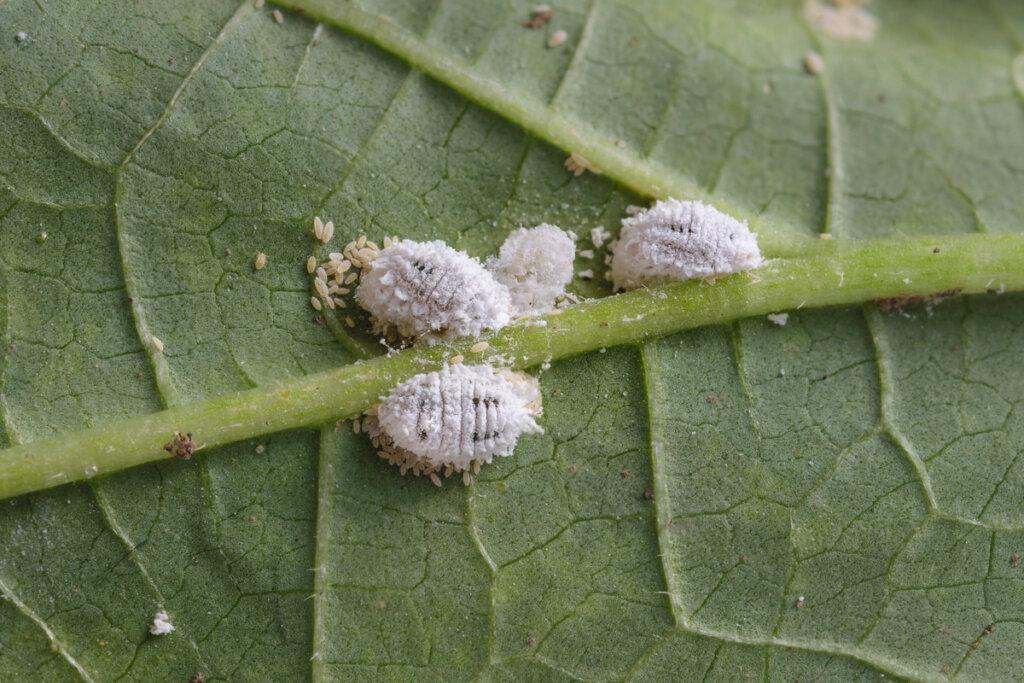 Insectos devastadores pero útiles