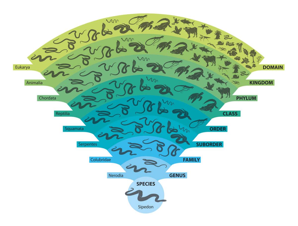 Concepto de taxonomía.