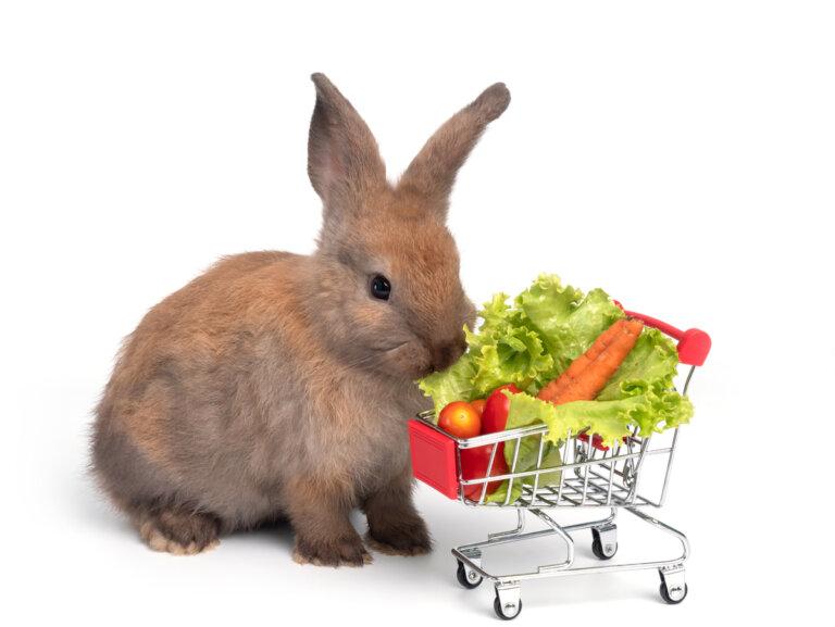 5 consejos y recetas fáciles para alimentar a tu conejo
