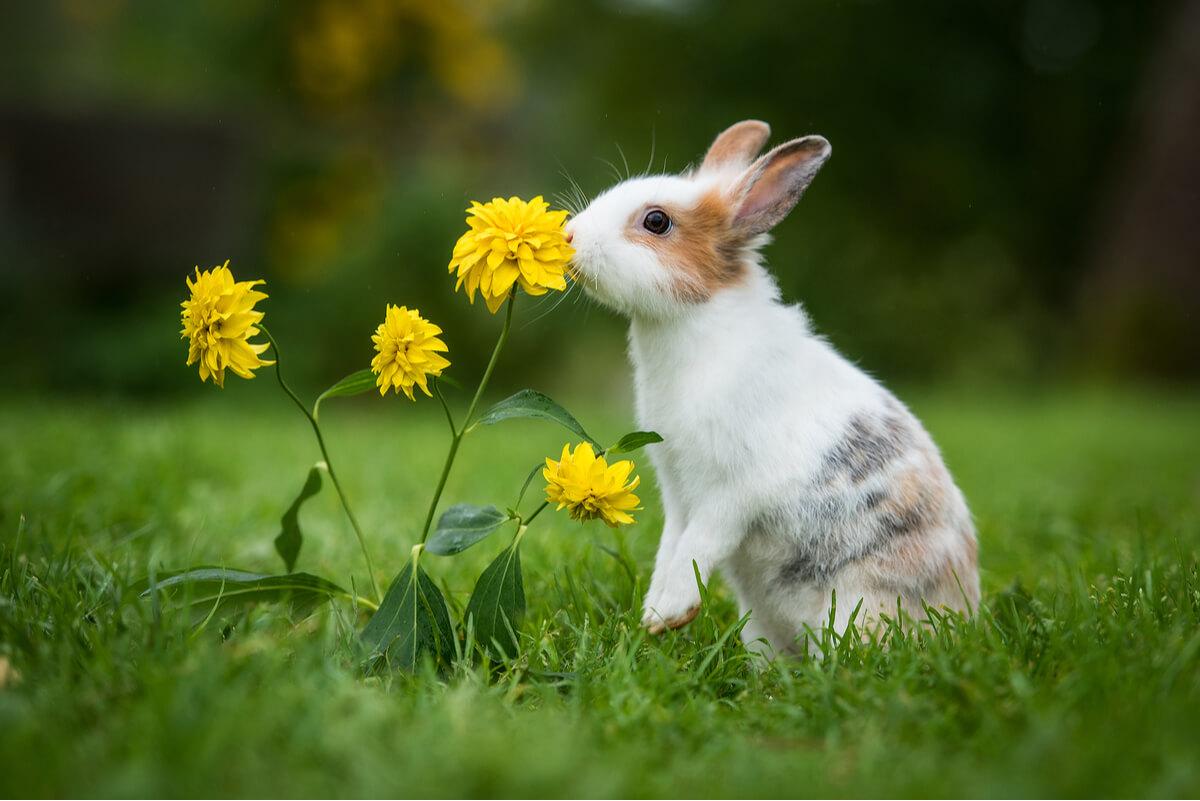 Alimentar al conejo correctamente es esencial para su bienestar.