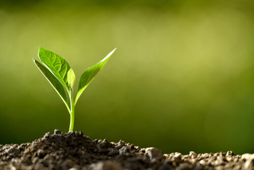 Semilla de planta emergiendo del suelo.