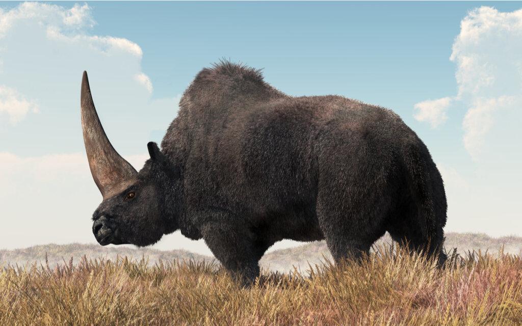 El elasmoterio: ¿pudo ser el unicornio siberiano?