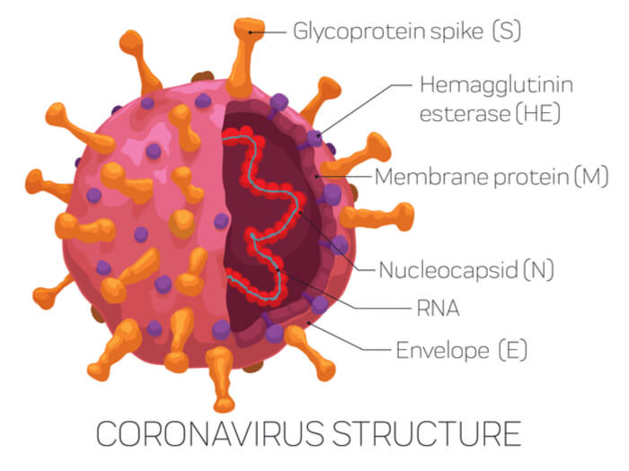 Estructura del coronavirus causante de la pandemia.
