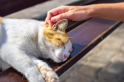 ¿Cómo ayudar a los gatos callejeros durante la cuarentena?