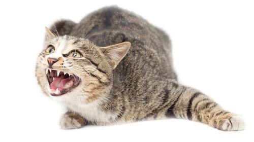 ¿Tienen los gatos ansiedad?