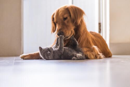 Animales que adoptan crías de otra especie: ¿por qué?