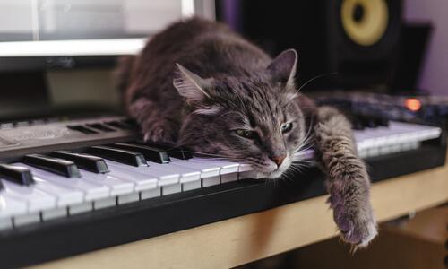 gato dormitando sobre un piano.