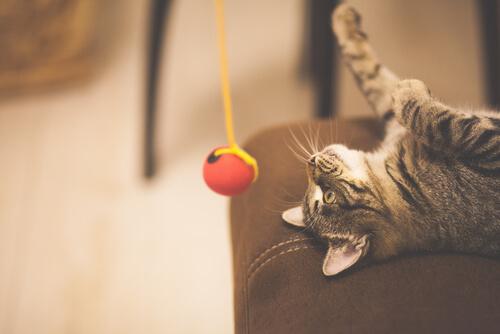 Estrés en los gatos durante el confinamiento