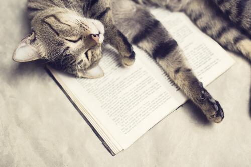 Un gato sobre un libro.